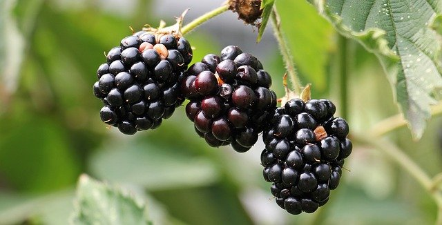 Benefits of eating berries for the body
